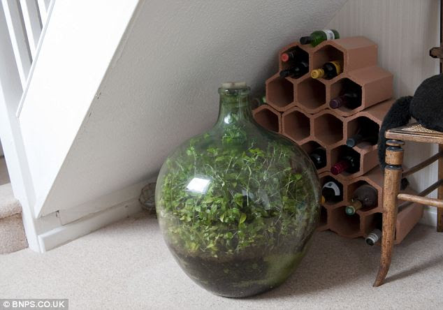 Habitable zone: The spot under the stairs where Mr Latimer has kept the bottle garden for the past 27 years