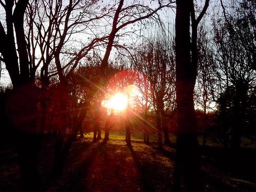 Raggi di sole tra gli alberi by Ylbert Durishti