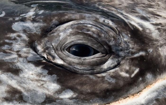 fotografia-cetaceos-ballenas-delfines-christopher-swann (11)