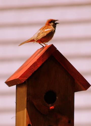 little bird CU