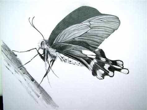 butterfly pencil drawing paint shop pinterest