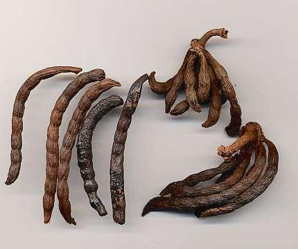 Image result for negro pepper
