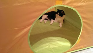 Josie hanging out in the twin's play tent