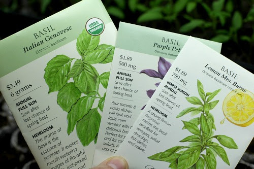 How to Grow Basil {Start to Finish} - One Hundred Dollars ...