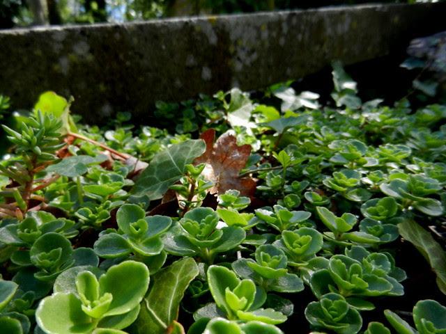 Highgate Cemetery_16