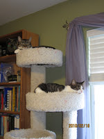Billy and Oscar resting in the tower