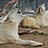 Wild Spirit Wolf Sanctuary Wolves' photos