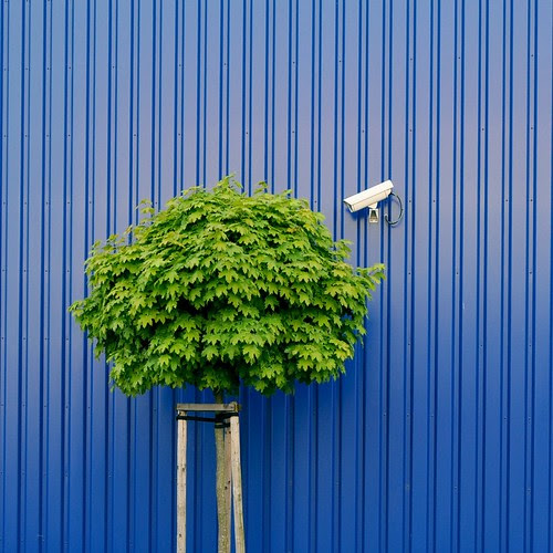 Tree watching by IKEA security por Heidelknips (on/off/busy/busy)