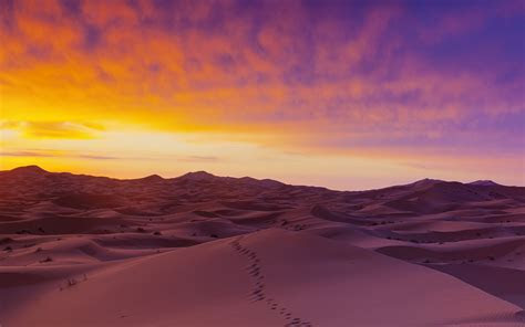 Sand dunes illuminated at sunrise, Erg Chebbi, Sahara