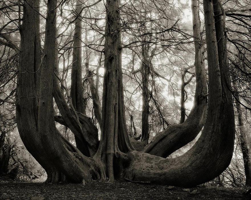 ancient-trees-beth-moon-14