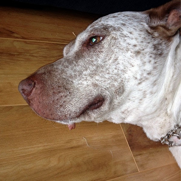 All About Skin Tags on Dogs (Plus Lipomas and Other Lumps)