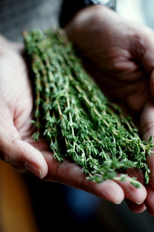 Thyme. Flavour Your Foods With Fresh Herbs