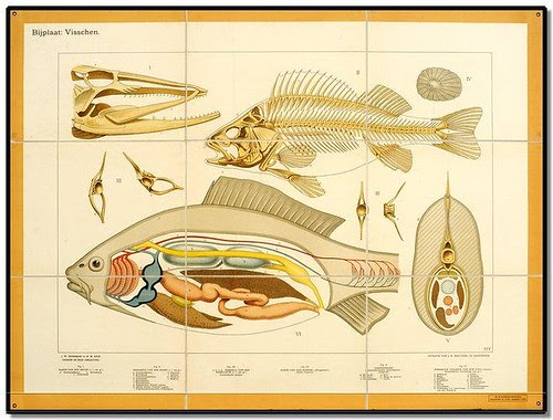 Fish - Zoological Wallcharts 1900-1950
