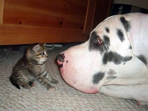 perro gato Perro y gato cara a cara