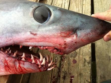 Pescadores tomaram um susto com o intruso gigante