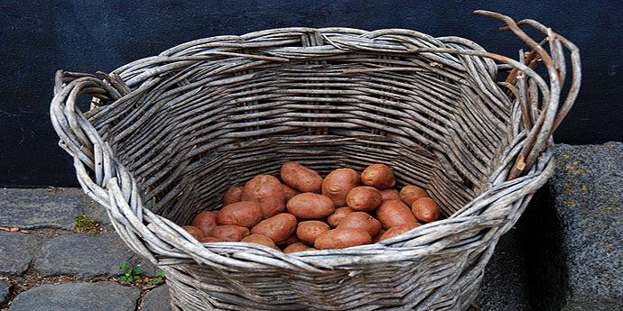 Anbau Kartoffel Azoren