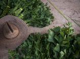 agroecologia-fernando-funes-cuba-3