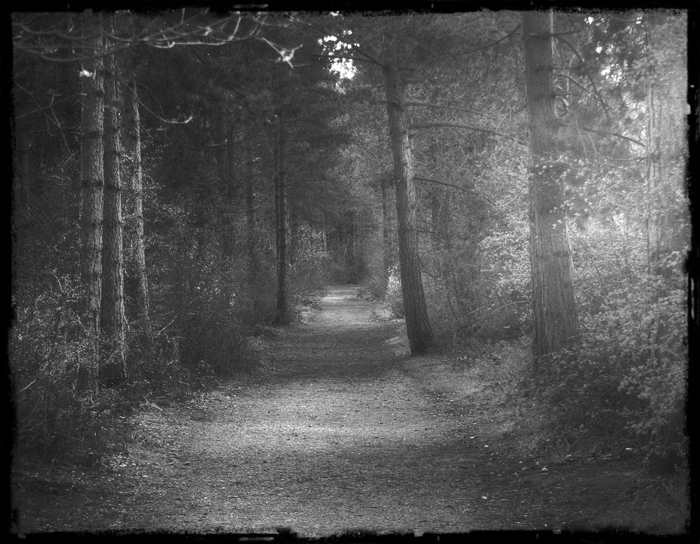 Path b&w