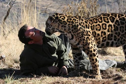 Кевин общается с леопардом. Фото