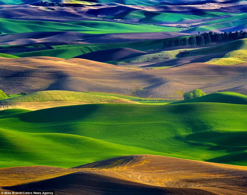 Number one destination: Amateur photographer Mike Brandt now visits the Palouse valley once a week after falling in love with the place