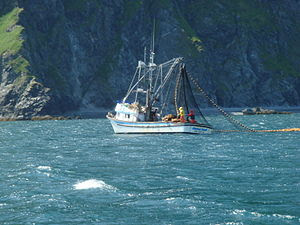 English: A seiner fishing for salmon off the c...