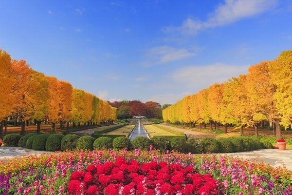 12 Lugares para apreciar o Outono no Japão