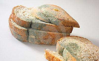 Resultado de imagen para moho en los alimentos