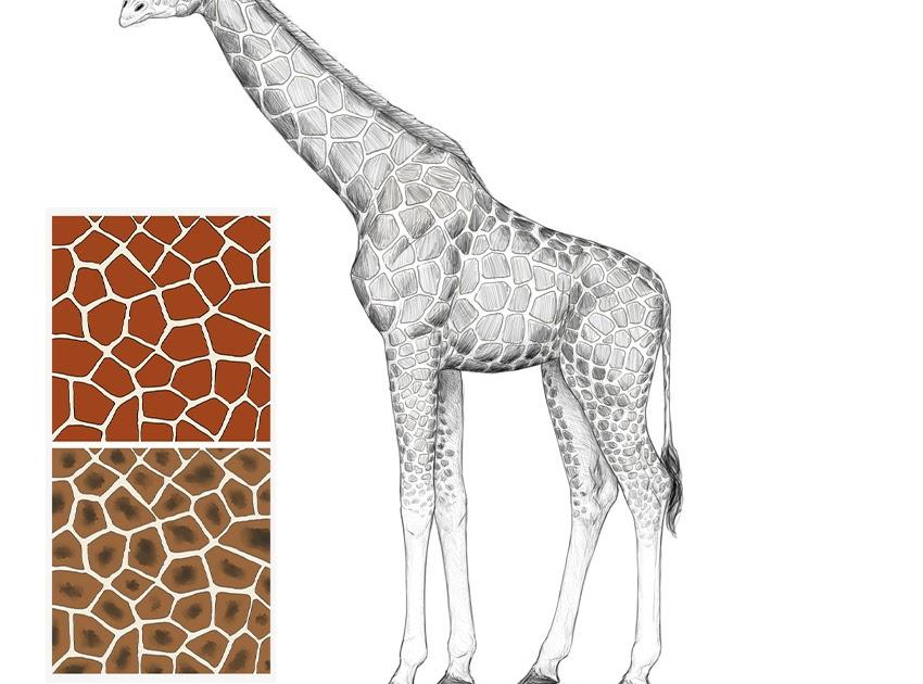 Simple Animal Drawings Giraffe