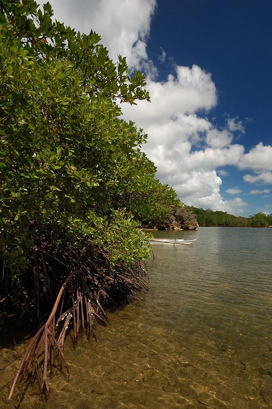 Igang Mangroves