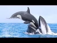 Yanlış Rakibe Bulaşan 11 Deniz Hayvanı - Herşey Dahil