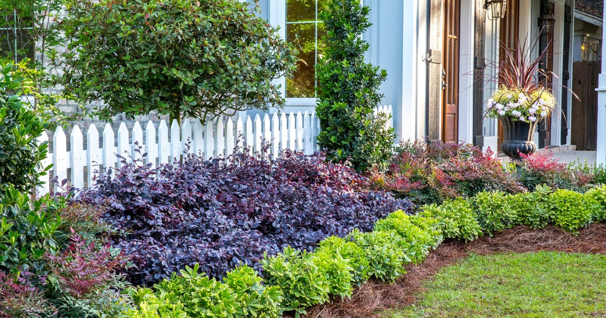 Seeking Versatility In Garden Design Give Purple Diamond Semi