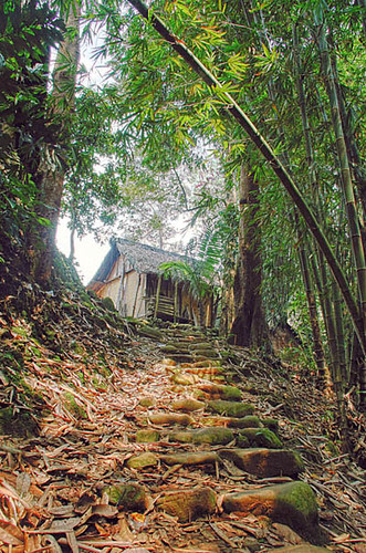 Baduy forest Banten