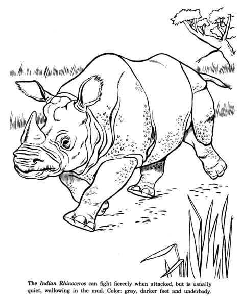 animal drawings coloring pages indian rhinoceros animal