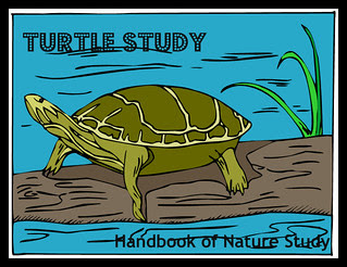 Turtle Study Button