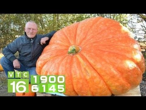 Mỹ phát triển giống cây trồng biến đổi gen | VTC16