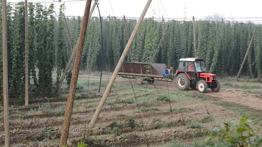 Image result for zatec hop field