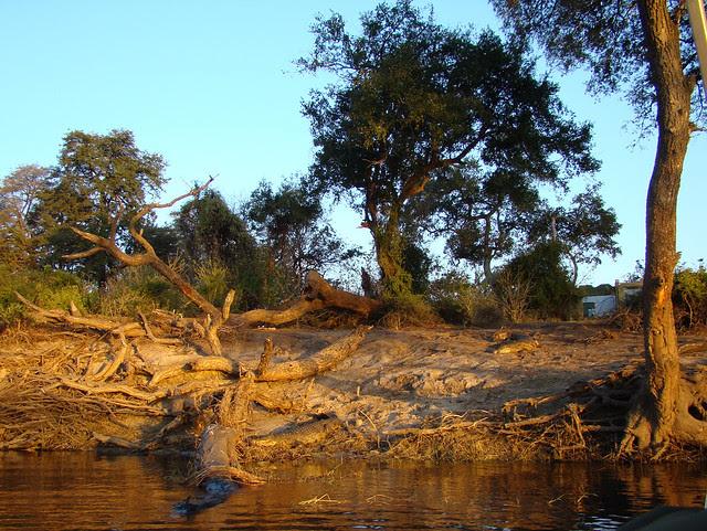 DSC09437 Two Crocodile sunset
