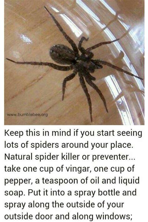 1000  ideas about Natural Bug Repellant on Pinterest   Anti Itch Cream, Essential Oils and