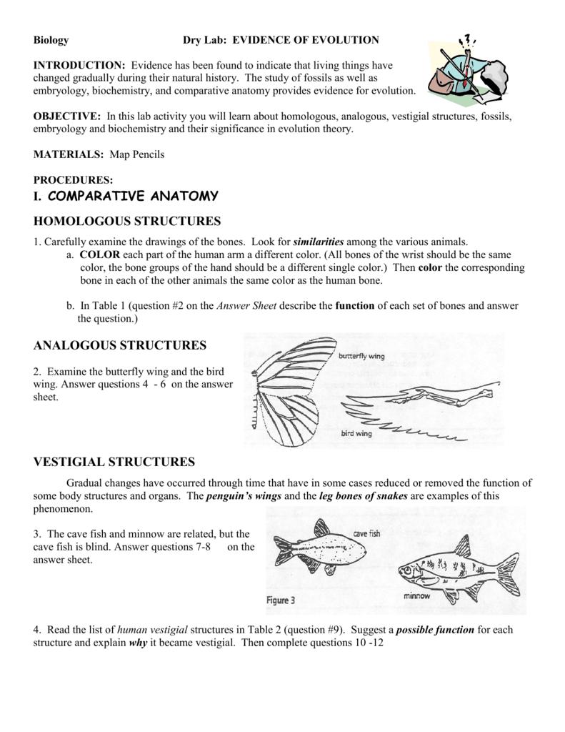 worksheet. Evidence Of Evolution Worksheet. Worksheet Fun Worksheet Study Site