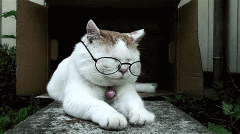 gambar lucu profesi  dunia kucing  kabar dunia