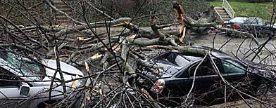 A tree downed during heavy rainstorms covers the tops of two parked cars in the Germantown section of Philadelphia on Sunday, March 14, 2010. (AP Photo/Jacqueline Larma)