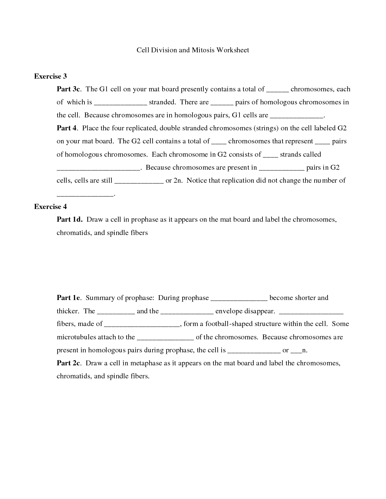 25 Mitosis Review Worksheet Answers - Worksheet Resource Plans