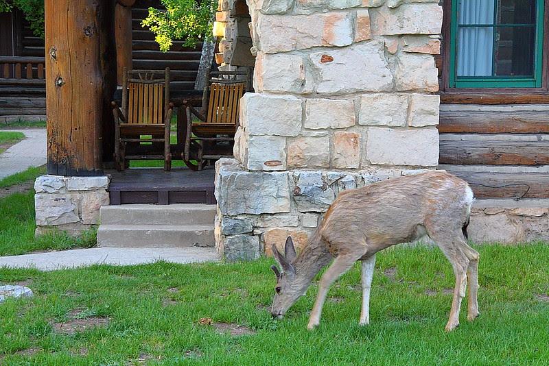 IMG_3125 Grand Canyon Lodge