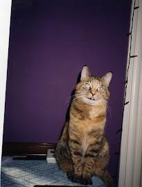 My Tookie, my heart kitty