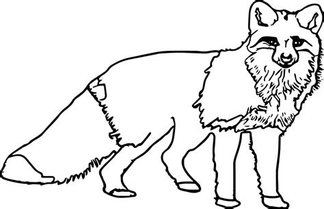 nocturnal coloring page images
