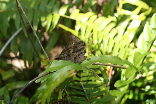 Botanic Garden Hervey Bay