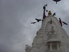 temple birds