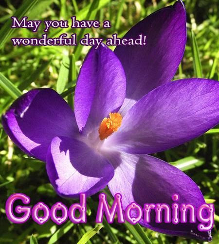 May You Have A Wonderful Day Ahead Good Morning Pictures Photos