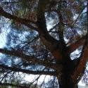О чём природа шепчет(Греция версия 2.0)