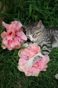 Gatos en Creta